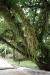 Baum mit Schmarotzerpflanzen