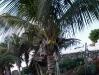 kokosnussecalero